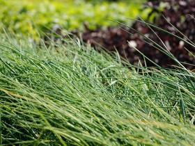 Paniers de légumes bios