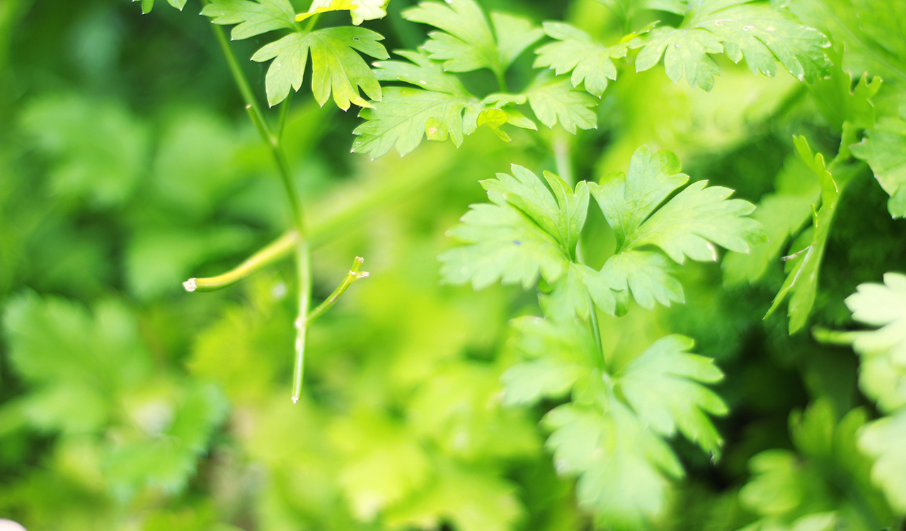 fines-herbes-legumes-paniers-bios
