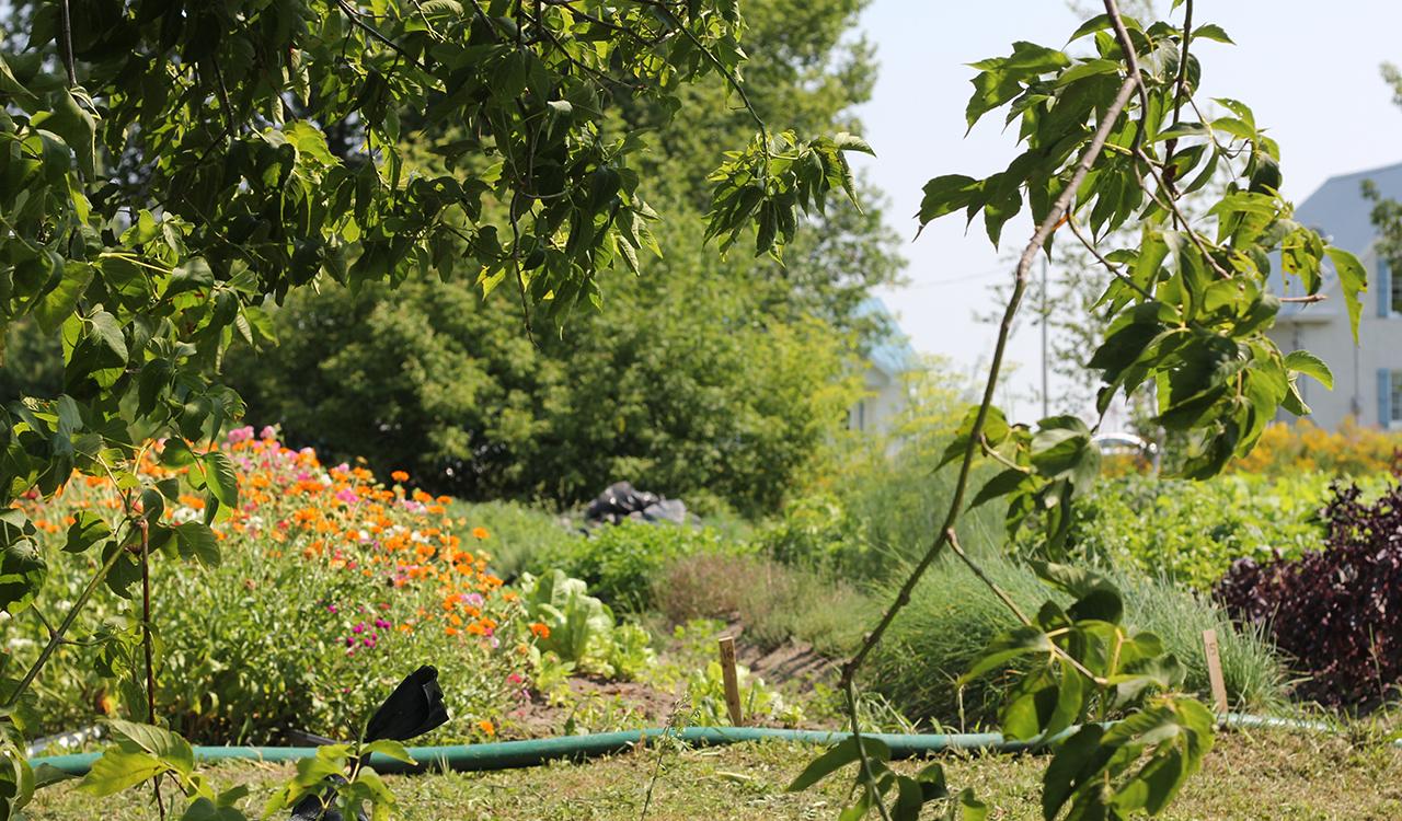 La fibre v g tale paniers bios - Jardin potager bio saint denis ...